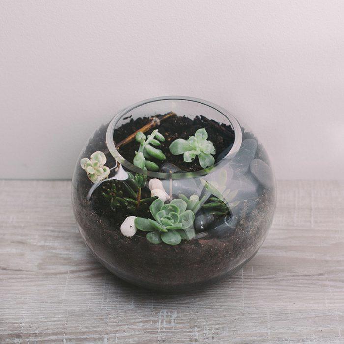 Medium Terrarium plants by Flower Gallery on Waiheke Island