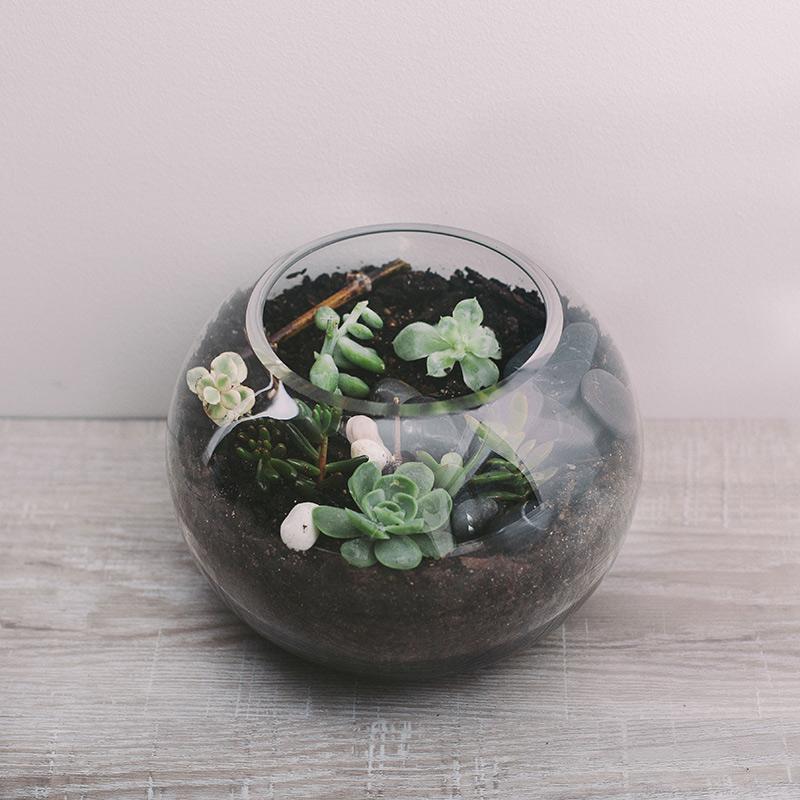 Medium Terrarium Flower Gallery