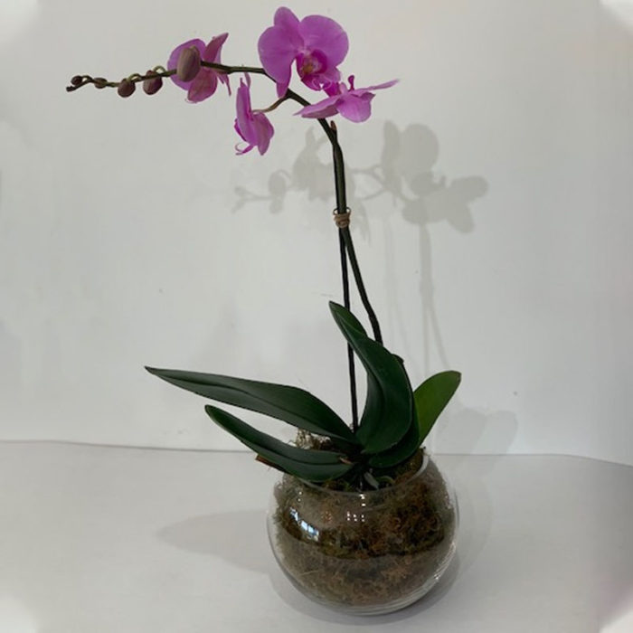 Orchid by Flower Gallery