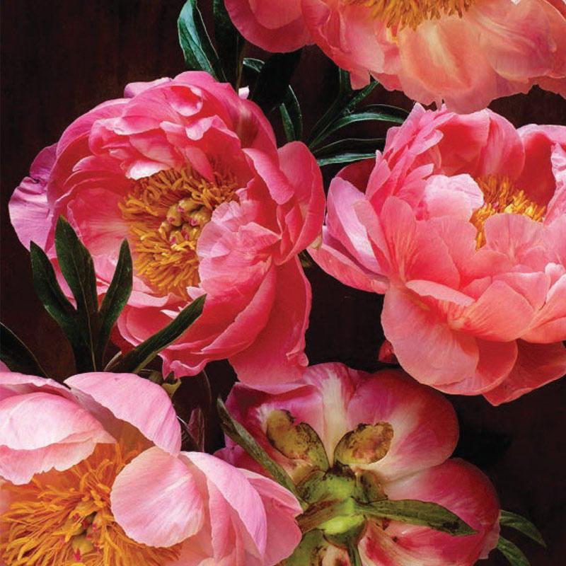 Peonie Cards at Flower Gallery Florist on Waiheke Island