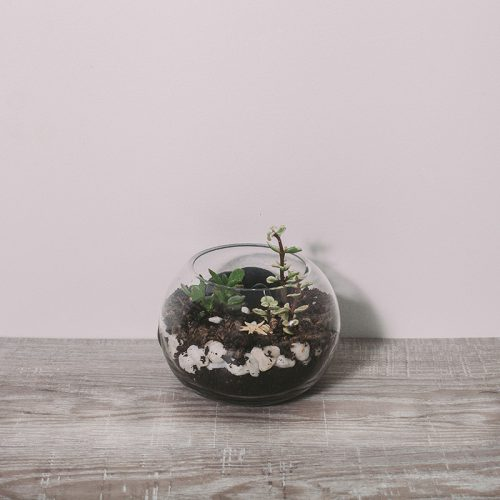 Small Terrarium by Flower Gallery on Waiheke Island