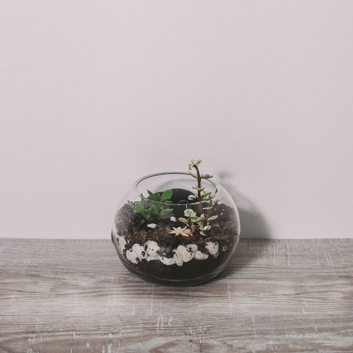 Small Terrarium by Flower Gallery on Waiheke Island