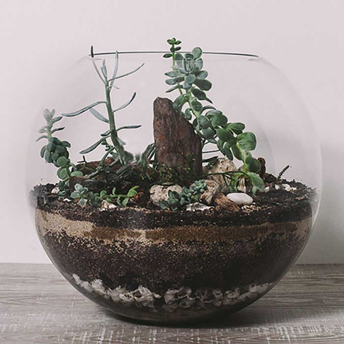 X-Large Terrarium by Flower Gallery on Waiheke Island